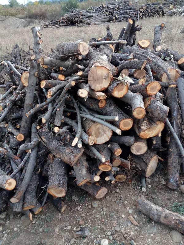 木材木屑 (1)
