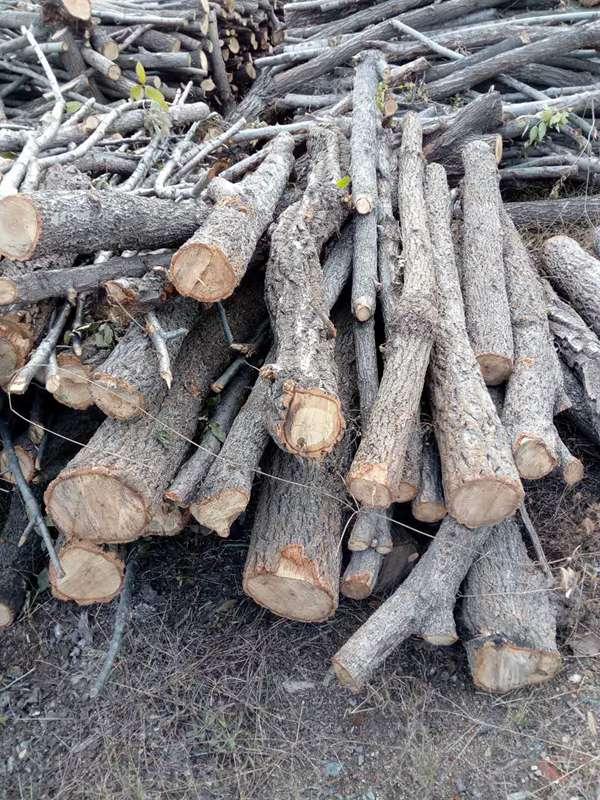 木材木屑 (3)