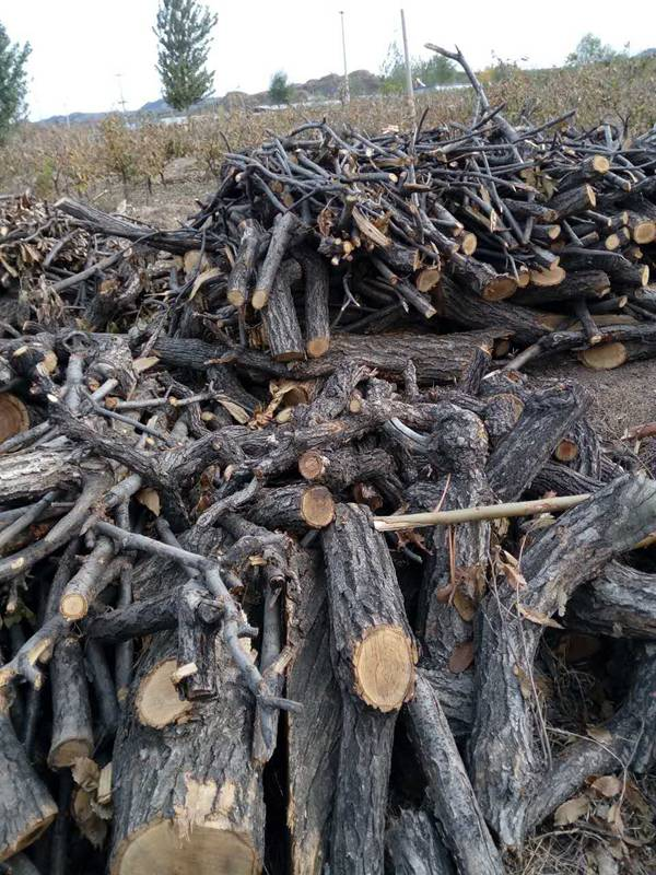 木材木屑 (2)